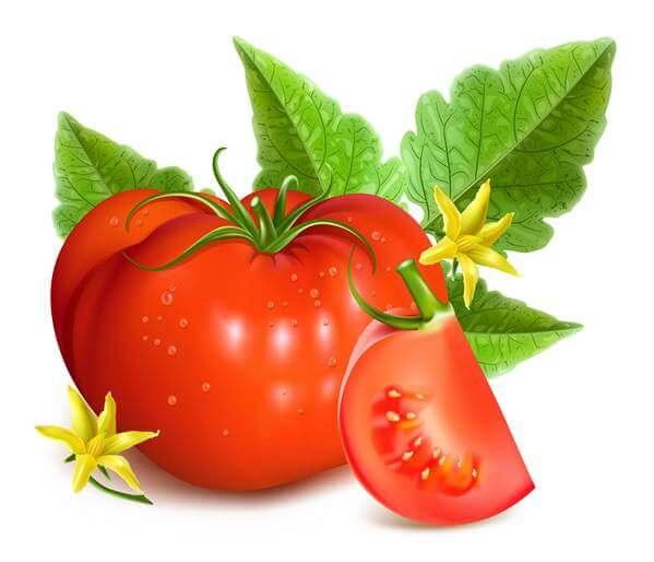 نیازهای آبی گوجه فرنگی