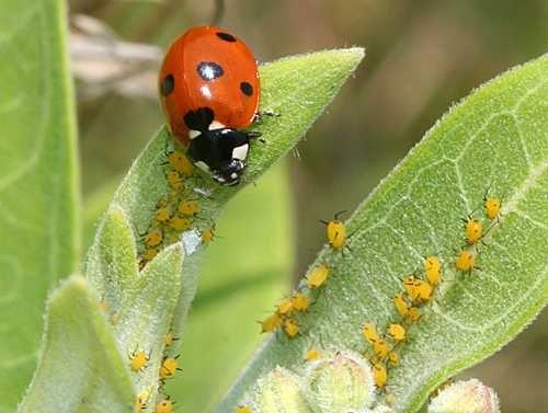 حشرات مفید در کشاورزی