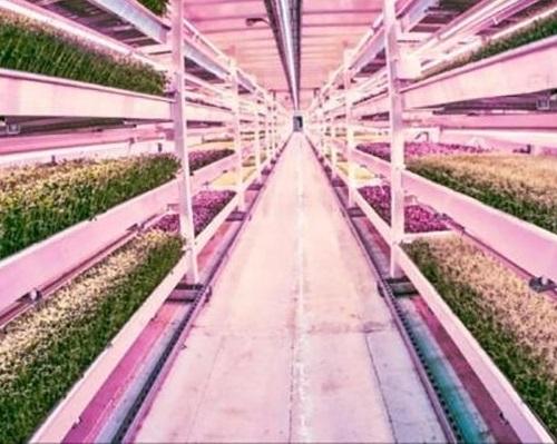 فناوری های جدید در صنعت کشاورزی-کشاورزی شهری و داخلی4