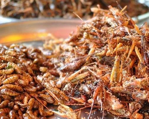 فناوری های جدید در صنعت کشاورزی-حشرات خوراکی و مواد مغذی گیاهی