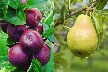 کود فروت ست درختان میوه و گیاهان-