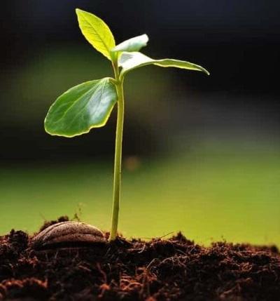 خصوصیات بذر خوب وسالم