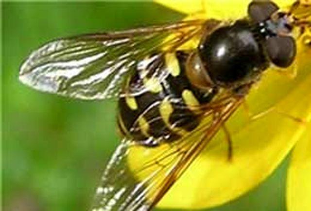 زنبور تریکو گراما