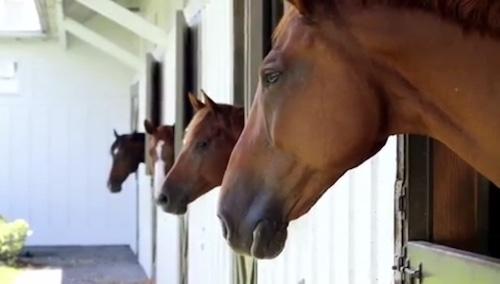محل نگهداری اسب